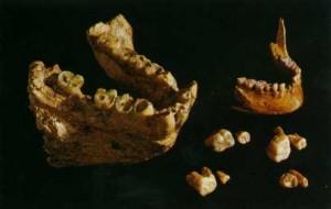 16. Dinți