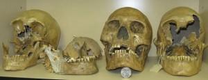 82. Cranii uriașe