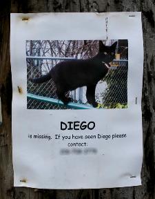Pisicile care lipsesc sunt un semn al activității sataniste.